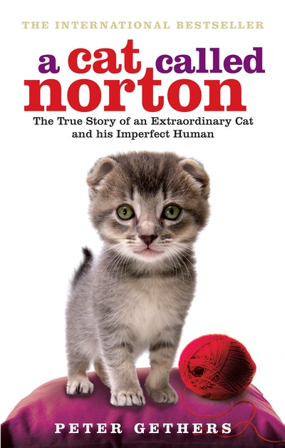 A Cat Called Norton