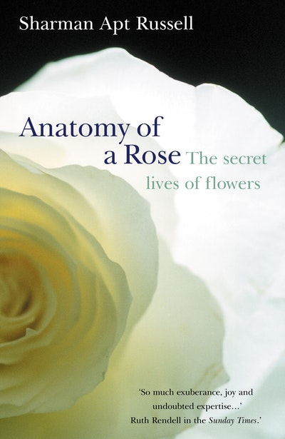 Anatomy Of A Rose