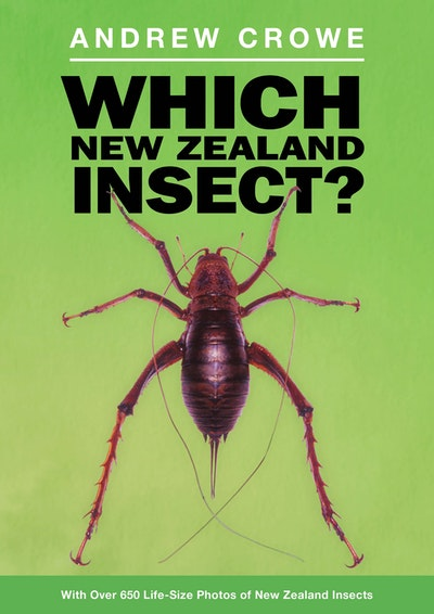 Which New Zealand Insect?