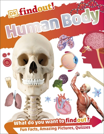 DKfindout!: Human Body