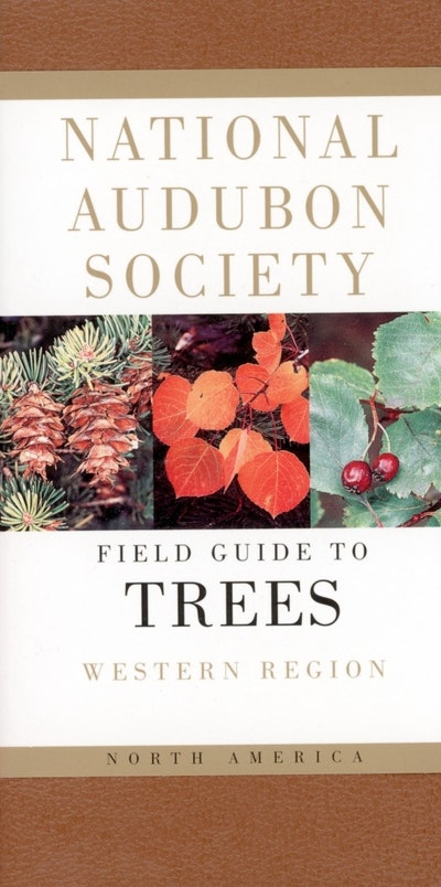 Field Guide To North American Trees
