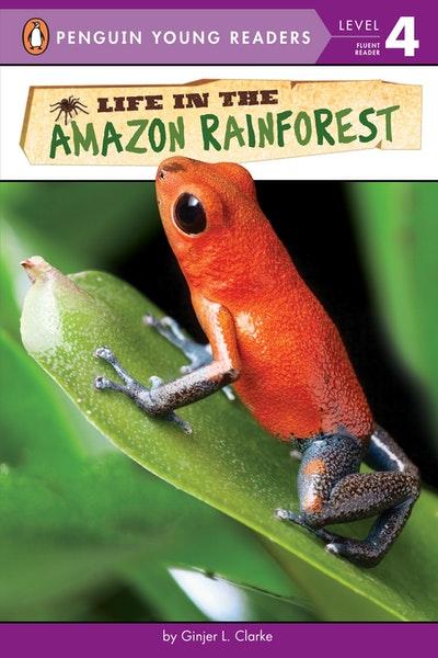 Life In The Amazon Rainforest