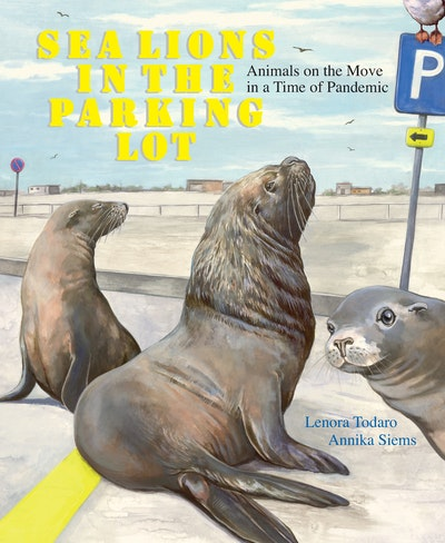 Sea Lions in the Parking Lot