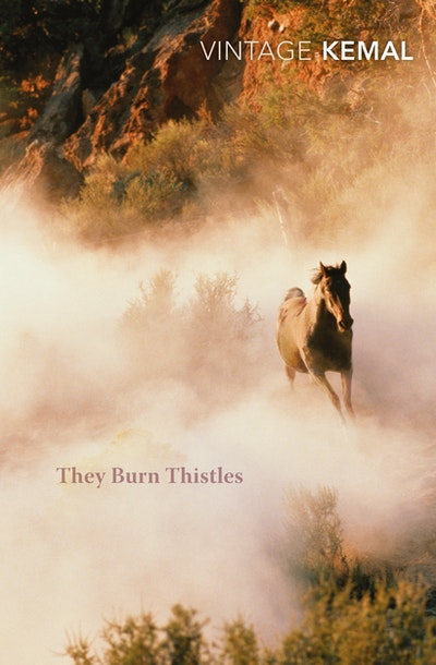 They Burn Thistles