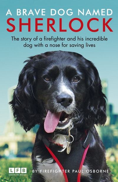 A Brave Dog Named Sherlock
