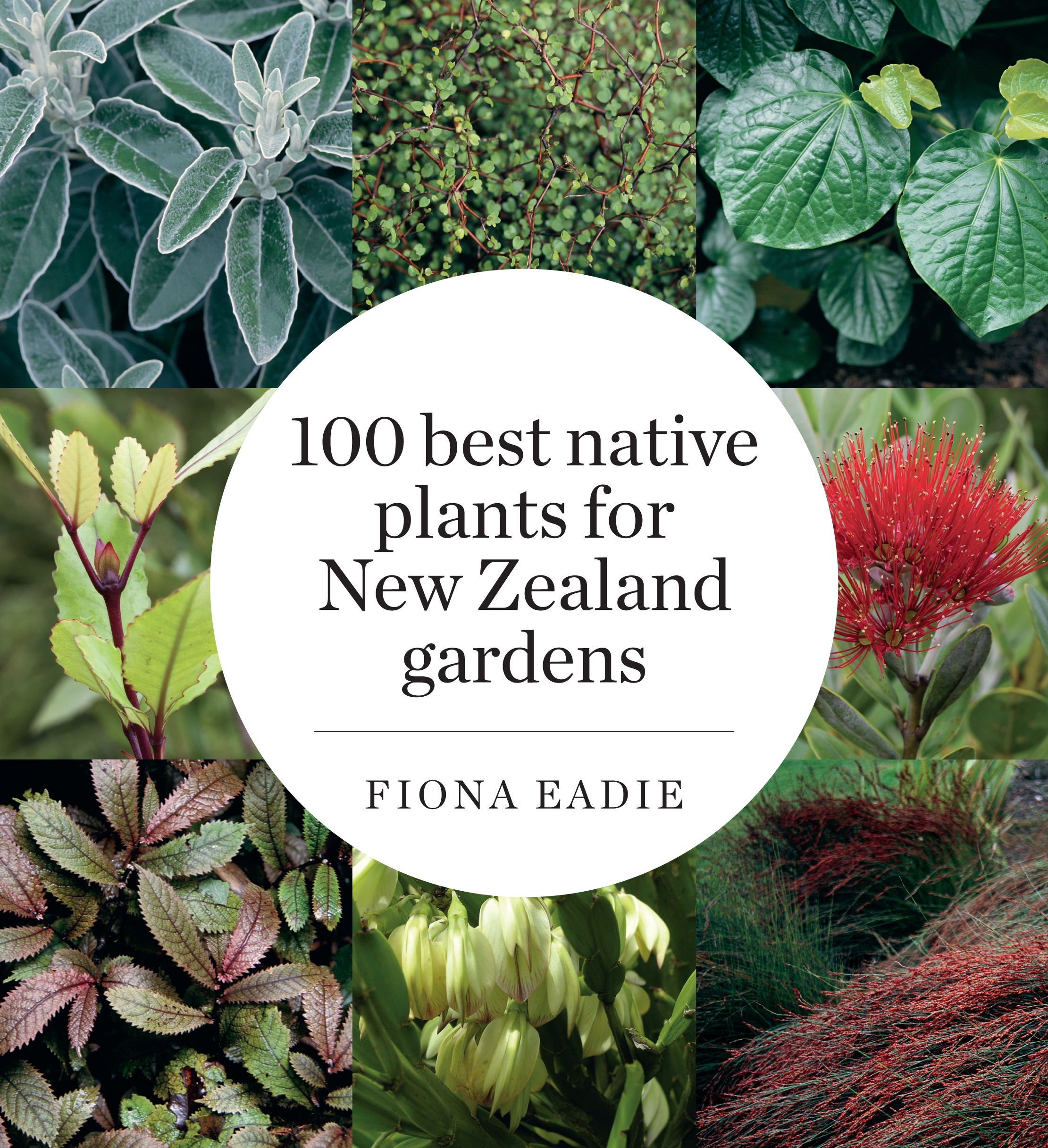 100 best native plants for new zealand gardens revised for New garden plants